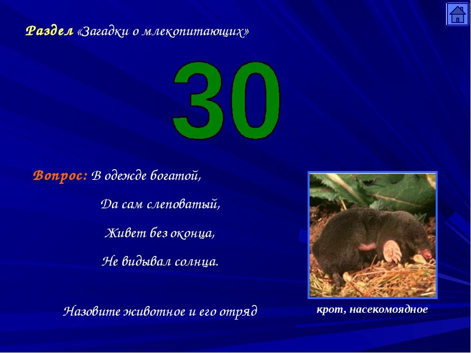 Раздел «Загадки о млекопитающих» Вопрос: В одежде богатой, Да сам слеповатый,...