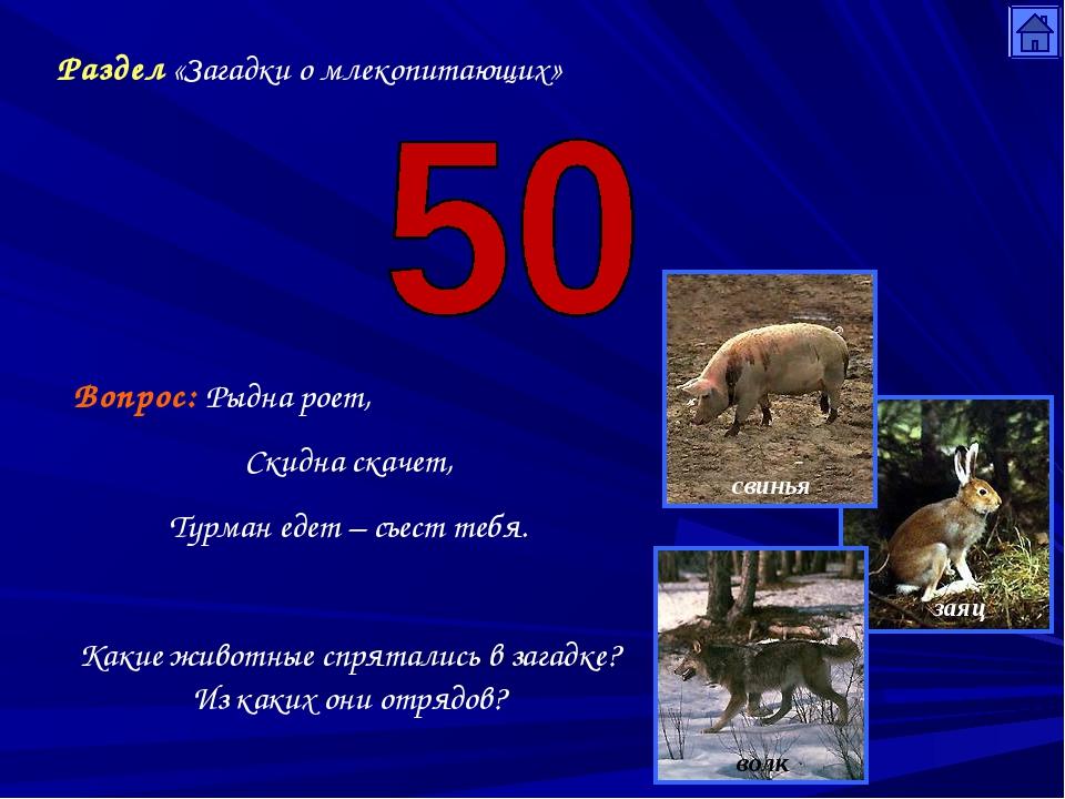 Раздел «Загадки о млекопитающих» Вопрос: Рыдна роет, Скидна скачет, Турман ед...