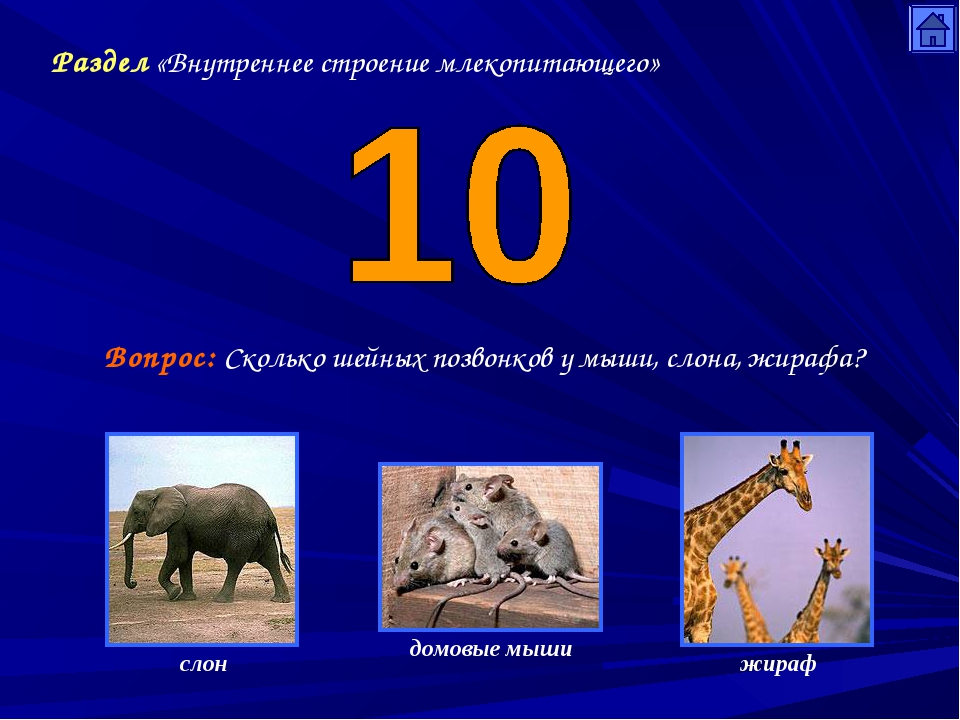 Раздел «Внутреннее строение млекопитающего» Вопрос: Сколько шейных позвонков...