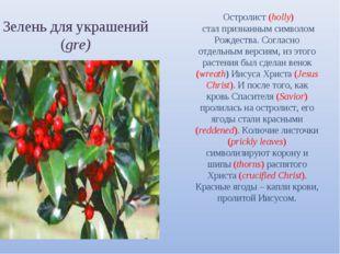 Зелень для украшений (gre) Остролист (holly) стал признанным символом Рождест
