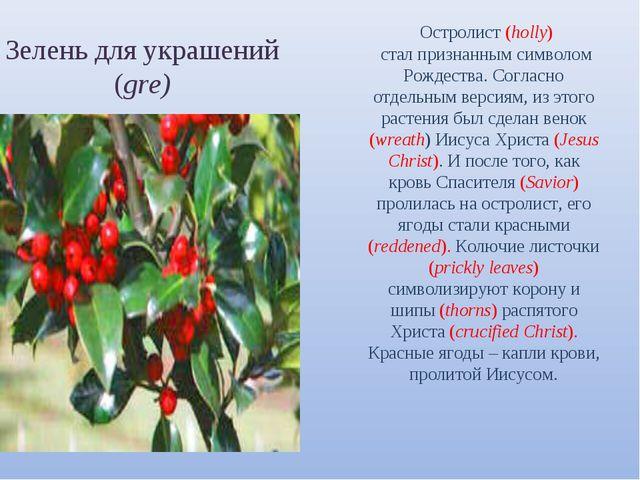 Зелень для украшений (gre) Остролист (holly) стал признанным символом Рождест...