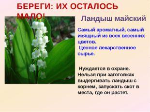 Самый ароматный, самый изящный из всех весенних цветов. Ценное лекарственное