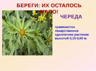 БЕРЕГИ: ИХ ОСТАЛОСЬ МАЛО! ЧЕРЕДА травянистое лекарственное однолетнее растени
