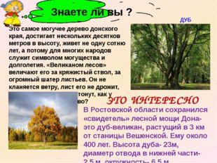 В Ростовской области сохранился «свидетель» лесной мощи Дона- это дуб-велика