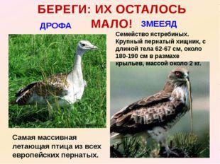 БЕРЕГИ: ИХ ОСТАЛОСЬ МАЛО! ДРОФА ЗМЕЕЯД Самая массивная летающая птица из всех