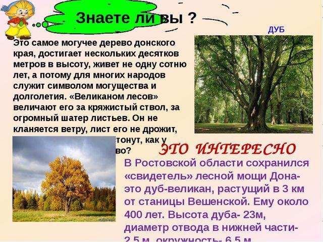 В Ростовской области сохранился «свидетель» лесной мощи Дона- это дуб-велика...