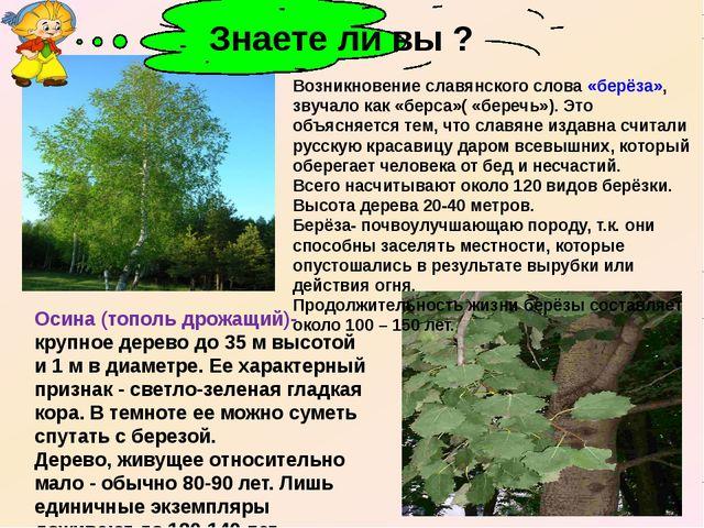 Осина (тополь дрожащий)- крупное дерево до 35 м высотой и 1 м в диаметре. Ее...