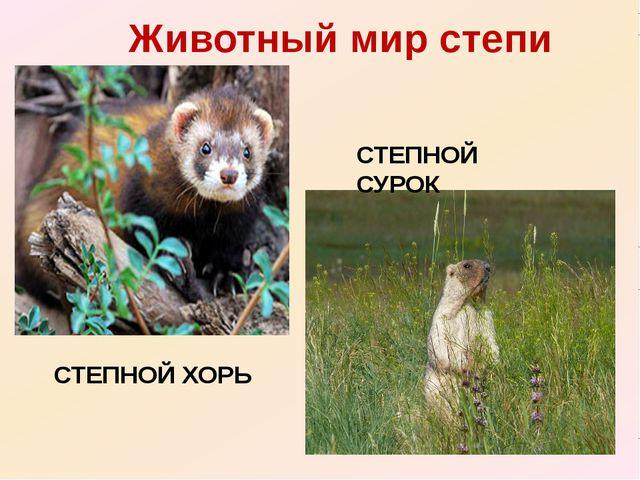 Животный мир степи СТЕПНОЙ ХОРЬ СТЕПНОЙ СУРОК