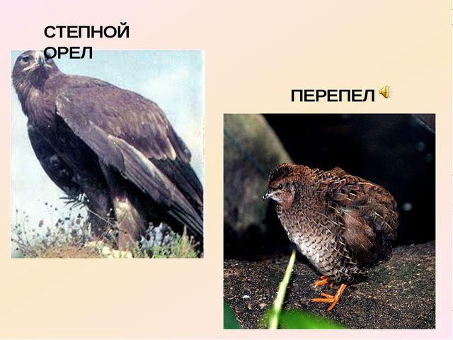 СТЕПНОЙ ОРЕЛ ПЕРЕПЕЛ