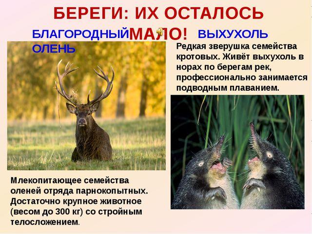 БЛАГОРОДНЫЙ ОЛЕНЬ БЕРЕГИ: ИХ ОСТАЛОСЬ МАЛО! ВЫХУХОЛЬ Млекопитающее семейства...