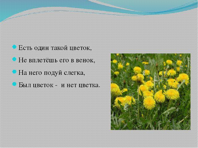 Есть один такой цветок, Не вплетёшь его в венок, На него подуй слегка, Был ц...