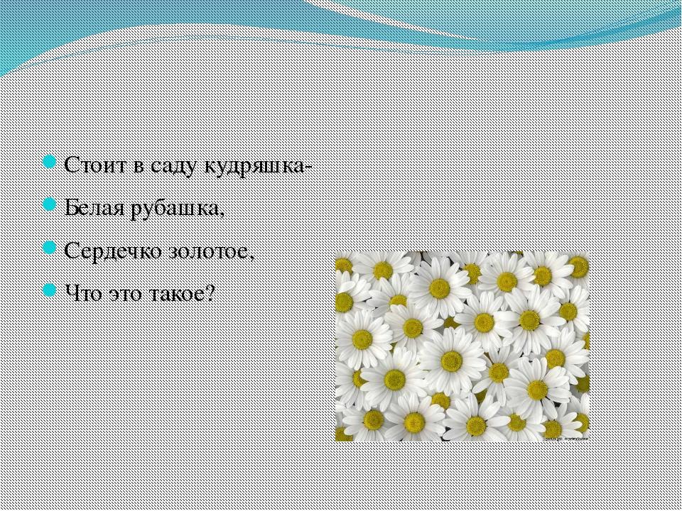 Стоит в саду кудряшка- Белая рубашка, Сердечко золотое, Что это такое?