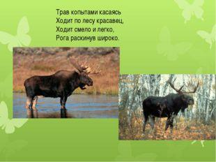 Трав копытами касаясь Ходит по лесу красавец, Ходит смело и легко, Рога раски