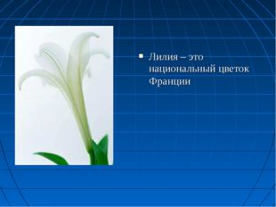 Лилия – это национальный цветок Франции