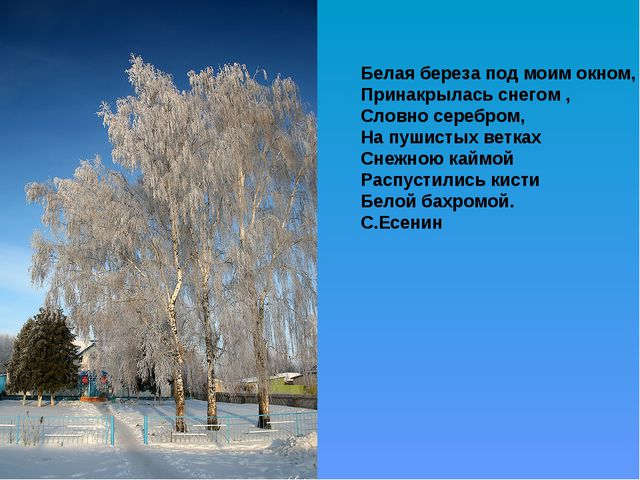 Белая береза под моим окном, Принакрылась снегом , Словно серебром, На пушист...