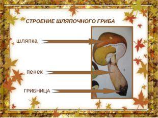 шляпка пенек СТРОЕНИЕ ШЛЯПОЧНОГО ГРИБА ГРИБНИЦА