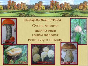 ГРУЗДЬ ШАМПИНЬОН ПОДОСИНОВИК СЪЕДОБНЫЕ ГРИБЫ Очень многие шляпочные грибы че
