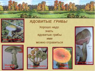 ЯДОВИТЫЕ ГРИБЫ Хорошо надо знать ядовитые грибы ими можно отравиться Желчный