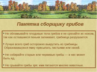 Памятка сборщику грибов Не обламывайте плодовые тела грибов и не срезайте их