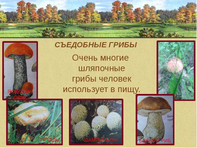 ГРУЗДЬ ШАМПИНЬОН ПОДОСИНОВИК СЪЕДОБНЫЕ ГРИБЫ Очень многие шляпочные грибы че...