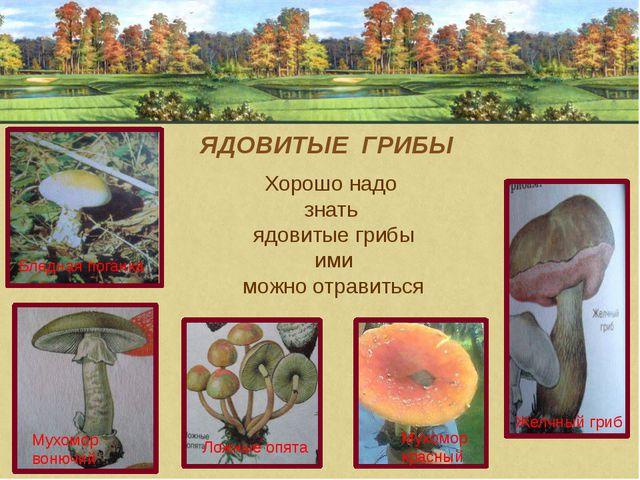 ЯДОВИТЫЕ ГРИБЫ Хорошо надо знать ядовитые грибы ими можно отравиться Желчный...