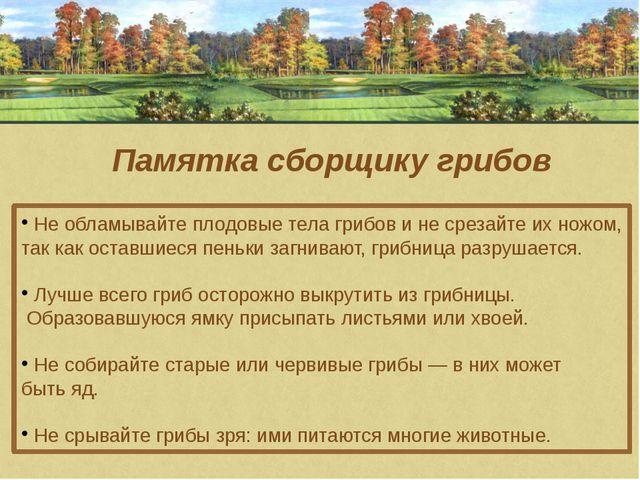Памятка сборщику грибов Не обламывайте плодовые тела грибов и не срезайте их...
