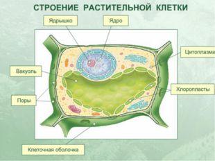 Главные части клетки