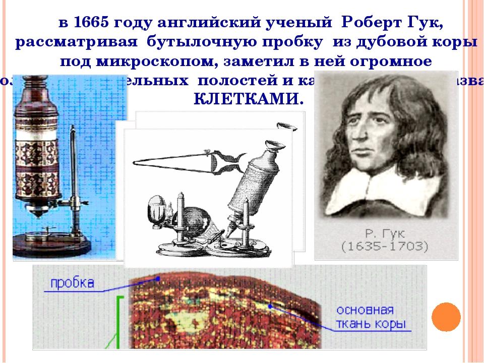 в 1665 году английский ученый Роберт Гук, рассматривая бутылочную пробку из...
