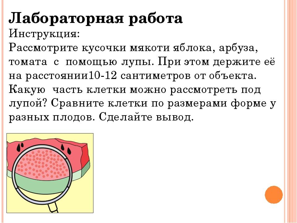 Лабораторная работа Инструкция: Рассмотрите кусочки мякоти яблока, арбуза, то...