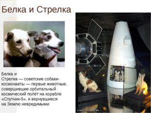 Белка и Стрелка Белка и Стрелка—советскиесобаки-космонавты— первые живот