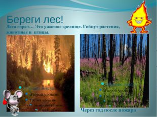 Береги лес! Леса горят… Это ужасное зрелище. Гибнут растения, животные и птиц