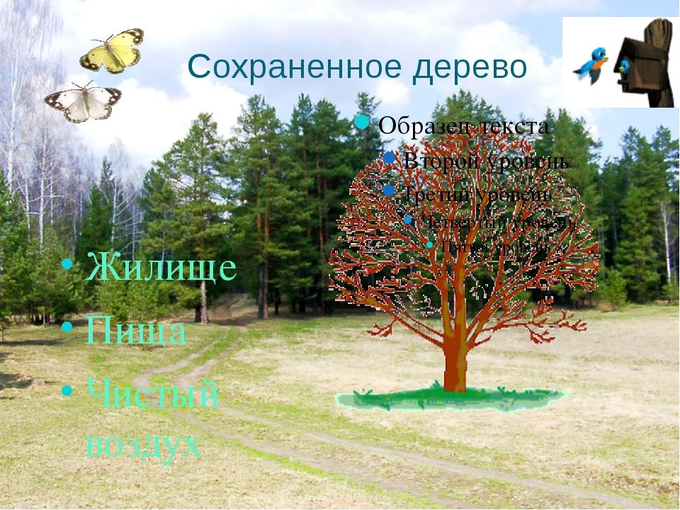 Сохраненное дерево Жилище Пища Чистый воздух