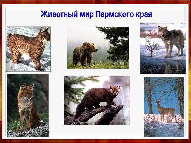 Животный мир Пермского края