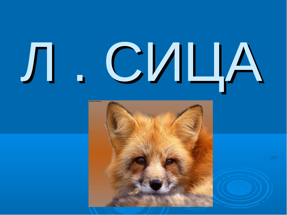 Л . СИЦА