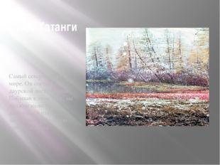 Лес Хатанги Самый северный лес в мире. Он состоит из даурской лиственницы. По