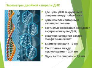 Параметры двойной спирали ДНК две цепи ДНК закручены в спираль вокруг общей о