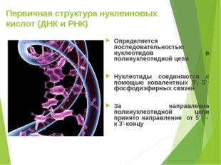 Первичная структура нуклеиновых кислот (ДНК и РНК) Определяется последователь