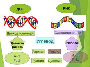 ДНК РНК Двухцепочечная Одноцепочечная Дезокси- рибоза Рибоза Углевод А=Т Г=Ц