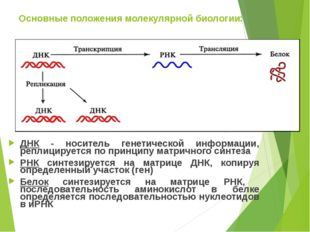 Основные положения молекулярной биологии: ДНК - носитель генетической информа