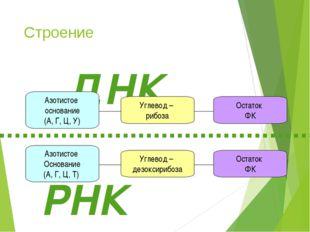 Строение Углевод – дезоксирибоза Азотистое Основание (А, Г, Ц, Т) Остаток ФК