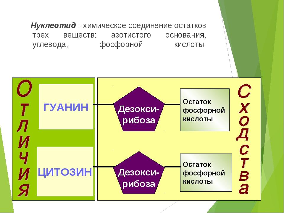 АДЕНИН Дезокси- рибоза Остаток фосфорной кислоты Дезокси- рибоза Остаток фосф...