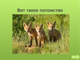 Что за зверь лесной, Встал, как столбик, под сосной, И стоит среди травы, Уши