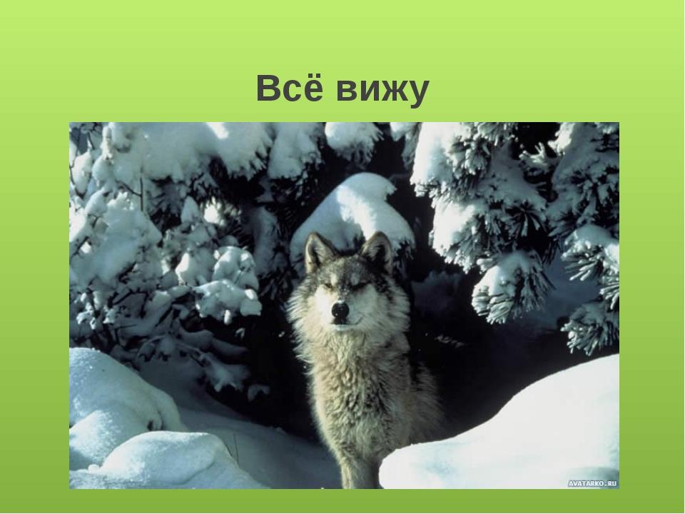 Волки охотятся стаями