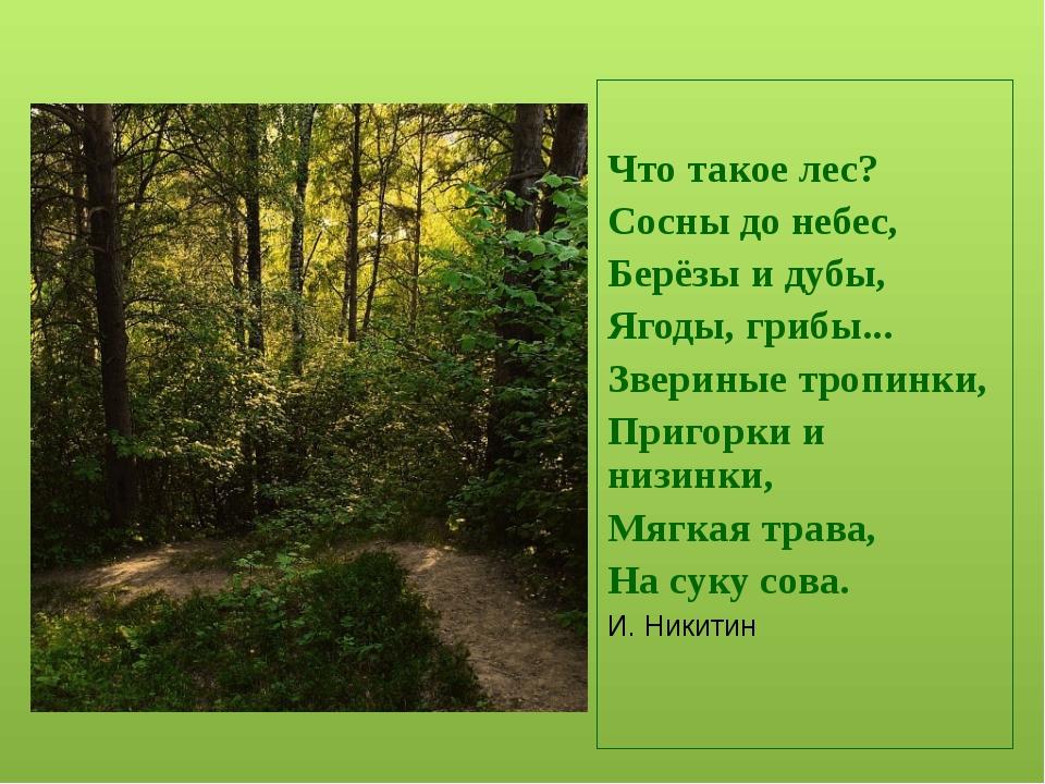По старинному русскому обычаю мы приветствуем храм Природы: поклонимся вправ...