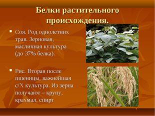 Белки растительного происхождения. Соя. Род однолетних трав. Зерновая, маслич