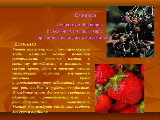Ежевика Существует 400 видов. В съедобных плодах сахара, органические кислот...