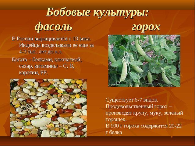 Бобовые культуры: фасоль горох В России выращивается с 19 века. Индейцы возде...