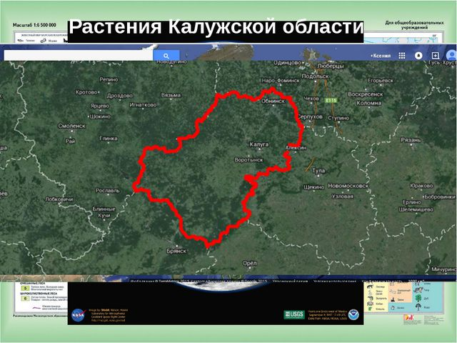 Растения Калужской области