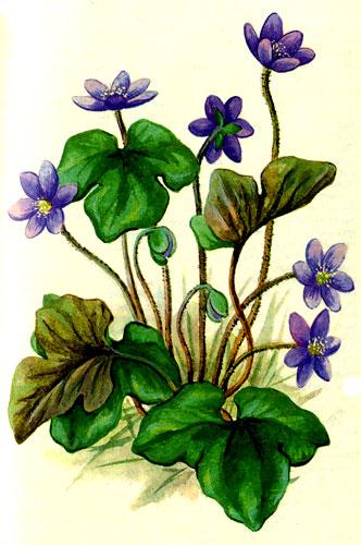 http://plant.geoman.ru/books/item/f00/s00/z0000010/pic/000109.jpg