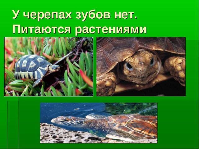 У черепах зубов нет. Питаются растениями